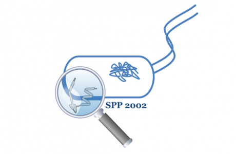 SPP 2002